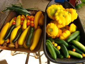 Daily harvest at Dodson Farm
